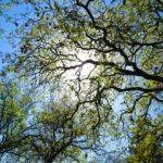 fronde degli alberi e cielo blu