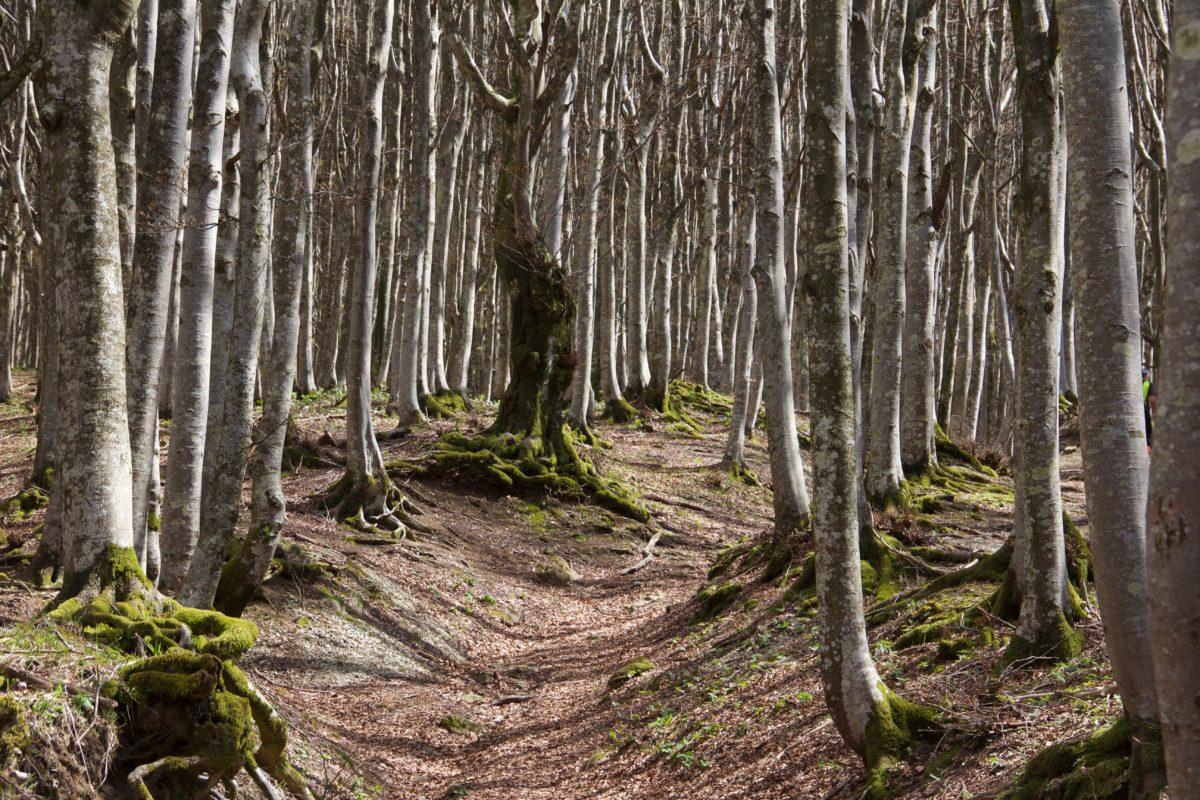 Mindfulness in cammino nelle foreste di Camaldoli