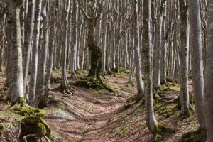 mindfulness in cammino a Camaldoli