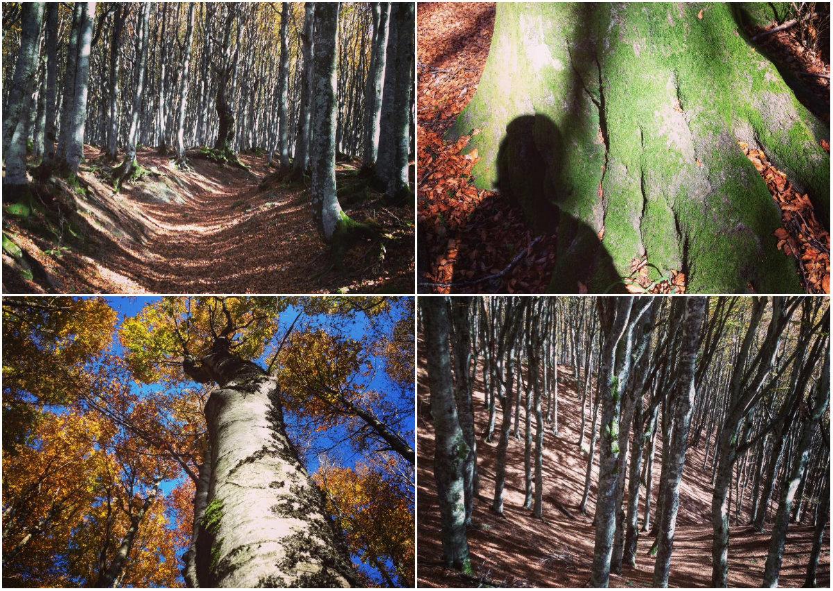 Una camminata (Quiet) in montagna