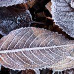 foglie brina